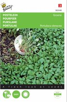 Postelein groene - Portulaca oleracea - set van 6 stuks