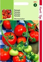Tomaten Moneymaker - Lycopersicon lycopersicum - set van 7 stuks