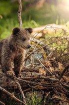 Bear Cub Notebook