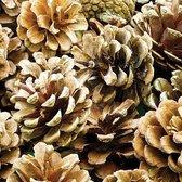 Echte natuurlijke dennenappels - materialen voor kinderen en volwassen om te herfst/kerst decoraties en knutselwerkjes maken (25 stuks)