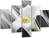 Glasschilderij Bloem | Grijs, Wit, Groen | 100x70cm 5Luik | Foto print op Glas |  F004697