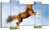 Canvas schilderij Paard | Bruin, Blauw, Wit | 120x65 5Luik