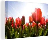 Een veld vol met rode tulpen Canvas 180x120 cm - Foto print op Canvas schilderij (Wanddecoratie woonkamer / slaapkamer) / Bloemen Canvas Schilderijen XXL / Groot formaat!