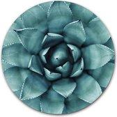 Ronde muursticker Agave Plant - WallCatcher | 60 cm behangsticker wandcirkel Cactus