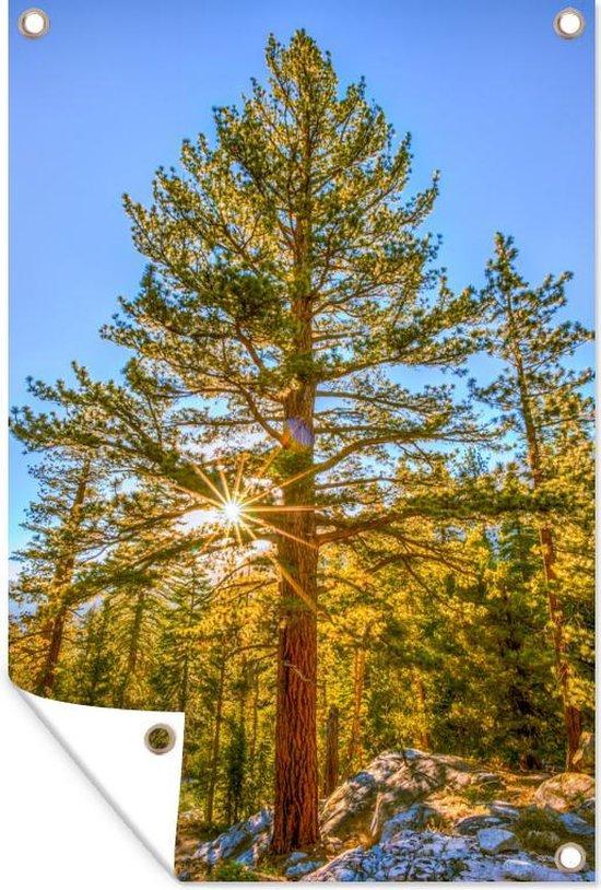 Zon in het Nationaal park Sequoia in de winter in de Verenigde Staten Tuinposter 80x120 cm - Tuindoek / Buitencanvas / Schilderijen voor buiten (tuin decoratie)