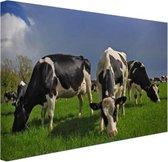 Kudde grazende koeien Canvas 30x20 cm - klein - Foto print op Canvas schilderij (Wanddecoratie woonkamer / slaapkamer) / Dieren Canvas Schilderijen