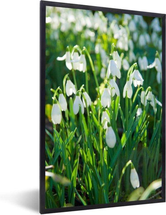 Foto in lijst - Veld van sneeuwklokjes fotolijst zwart 40x60 cm - Poster in lijst (Wanddecoratie woonkamer / slaapkamer)