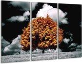 Canvas schilderij Natuur | Bruin, Grijs, Zwart | 120x80cm 3Luik