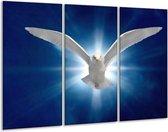 Canvas schilderij Vogel | Wit, Blauw | 120x80cm 3Luik