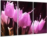 Canvas schilderij Tulp | Roze, Zwart | 120x80cm 3Luik