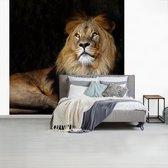 Behang - Fotobehang - leeuw zwarte achtergrond - Breedte 260 cm x hoogte 260 cm