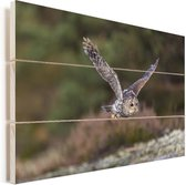 Oeraluil vliegt met gestrekte vleugels Vurenhout met planken 60x40 cm - Foto print op Hout (Wanddecoratie)