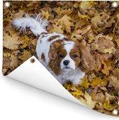 Cavalier King Charles-spaniël onder de herfstbladeren Tuinposter 200x200 cm - Tuindoek / Buitencanvas / Schilderijen voor buiten (tuin decoratie) XXL / Groot formaat!