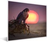 Foto in lijst - Een slechtvalk bij zonsopgang fotolijst wit 50x40 cm - Poster in lijst (Wanddecoratie woonkamer / slaapkamer)