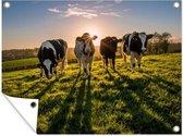 Tuinposter Friese koe - Zonsondergang achter vier Friese koeien Tuinposter 80x60 cm - Tuindoek/Buitencanvas/Schilderijen voor buiten (tuin decoratie)