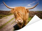 Oranje gekleurde Schotse hooglander Poster 40x30 cm - klein - Foto print op Poster (wanddecoratie woonkamer / slaapkamer) / Wilde dieren Poster