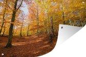 Tuinposter Beukenboom - Beukenbos met herfstachtige kleuren 90x60 cm - Tuindoek/Buitencanvas/Schilderijen voor buiten (tuin decoratie)