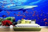 Haai bij koraalrif Fotobehang 380x265