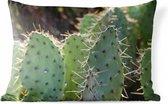 Buitenkussens - Tuin - Botanical Cactus Fotoprint - 60x40 cm
