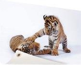 Spelende tijgerwelpjes Tuinposter 200x100 cm - Foto op Tuinposter / Schilderijen voor buiten (tuin decoratie)