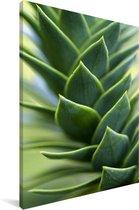 Close up van de slangenden Canvas 60x90 cm - Foto print op Canvas schilderij (Wanddecoratie woonkamer / slaapkamer)