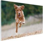 Rennende hond foto Glas 180x120 cm - Foto print op Glas (Plexiglas wanddecoratie) XXL / Groot formaat!