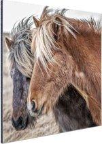 IJslandse paarden Aluminium 50x50 cm - Foto print op Aluminium (metaal wanddecoratie)