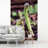 Fotobehang vinyl - Groeiende asperges in een tuin breedte 180 cm x hoogte 270 cm - Foto print op behang (in 7 formaten beschikbaar)