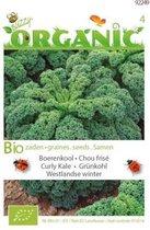 Buzzy® Organic Boerenkool Westlandse (BIO)
