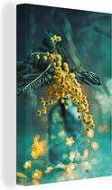 Canvas Schilderijen - Close-up van een gele mimosa bloem - 80x160 cm - Wanddecoratie