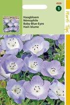 Nemophila Bloemzaad - Hemelsblauw