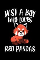 Just A Boy Who Loves Red Pandas