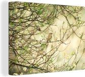 Tjiftjaf opgaande in de natuur Canvas 160x120 cm - Foto print op Canvas schilderij (Wanddecoratie woonkamer / slaapkamer) XXL / Groot formaat!