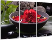 Glasschilderij Roos | Rood, Zwart, Groen | 120x80cm 3Luik | Foto print op Glas |  F006150