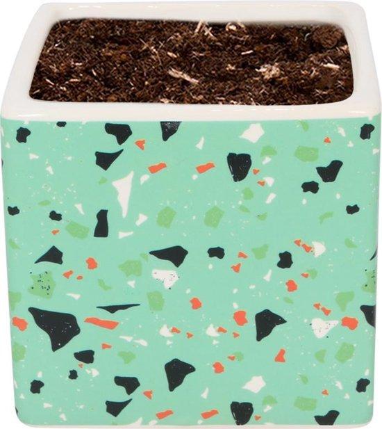 WLPlants Luxe Bloempot Terrazzo Ø7 - Vierkant deco - Groen - Hoogte 7 cm - Keramische sierpot met hoogwaardige afwerking - Geschikt als plantenpot - Binnen en buiten te gebruiken