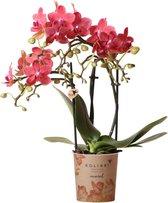 Kolibri Orchids | Phalaenopsis orchidee potmaat Ø9cm | Congo | oranje - rood