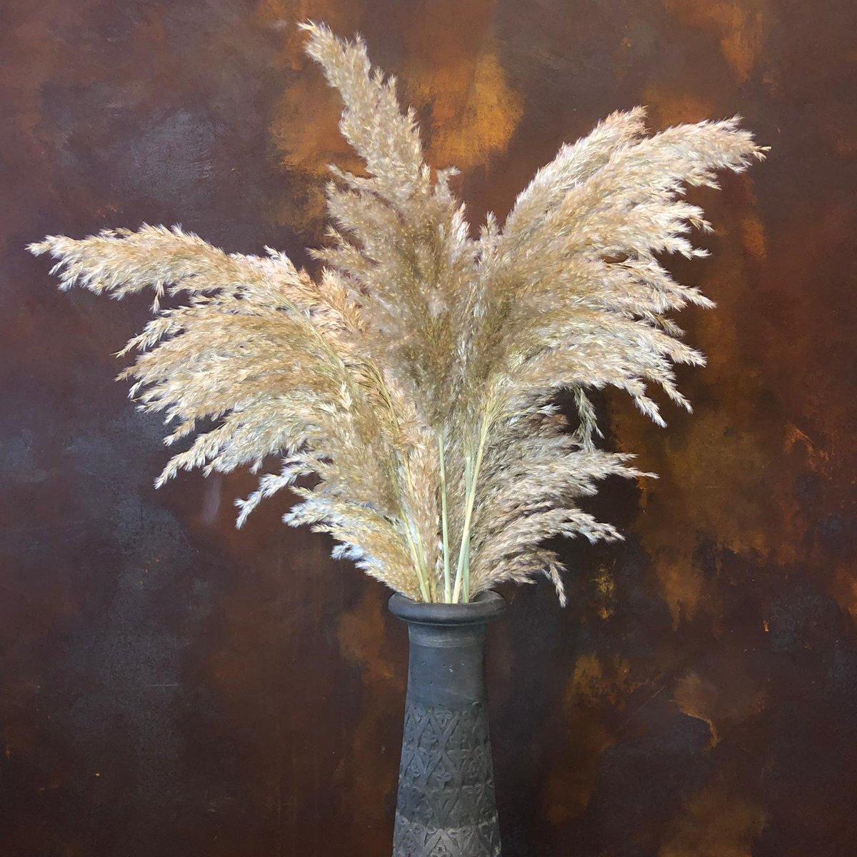 Rietpluimen   Pampas pluimen   Pampas gras   10 stuks   75 cm   BloomitUp