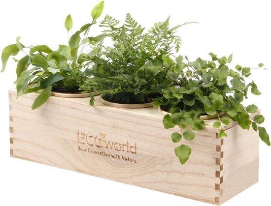Ecoworld Box - 3 Luchtzuiverende Varen Planten   Duurzaam Houten Kistje   Uniek Watergeefsysteem