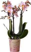 Kolibri Orchids | Phalaenopsis orchidee potmaat Ø9cm | roze