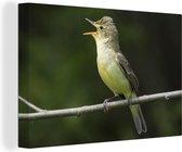 Spotvogel aan het fluiten op een tak Canvas 140x90 cm - Foto print op Canvas schilderij (Wanddecoratie woonkamer / slaapkamer)