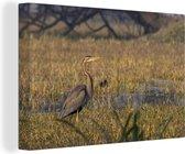 Purperreiger in een moerasgebied Canvas 30x20 cm - klein - Foto print op Canvas schilderij (Wanddecoratie woonkamer / slaapkamer)
