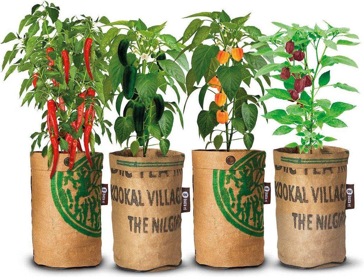 Complete Kweekset 4x Stadstuintjes hete pepers kweken, gemaakt van    theezakken uit India!