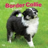 Border Collie Puppies - Border Collie Welpen 2020 - 18-Monat