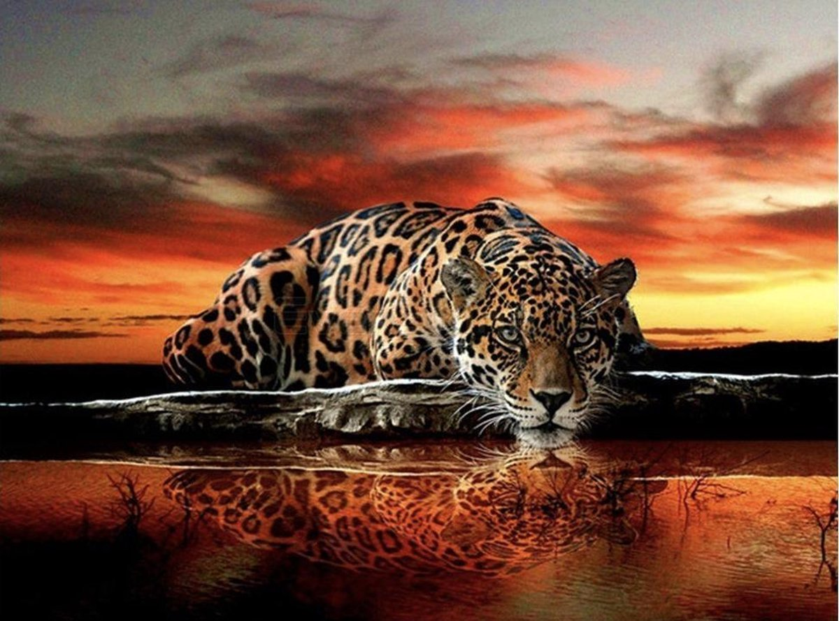 Diamond Painting Pakket Jachtluipaard in de avond - Volledig - Diamond Paintings - 50x40 cm - Vierkant - Dotz - SEOS Shop ®
