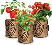 Speciale Actie van 32,95 voor 24,95  3 Stuks Moestuin kweekset aardbei, tomaat paprika GRATIS VERZENDING