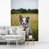 Fotobehang vinyl - Border Collie hond liggend in het mooie gras breedte 180 cm x hoogte 270 cm - Foto print op behang (in 7 formaten beschikbaar)