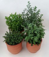 Complete Kruidentuin in 12cm kwekers pot.