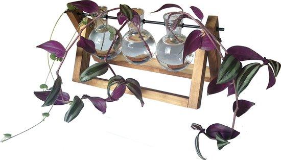 De Stekjesboom #3 Glazen Vaasjes t.b.v. Planten Stekken Hydrocultuur | Hydroponie