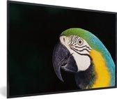 Foto in lijst - Close-up van een blauwkeelara met zwarte achtergrond fotolijst zwart 60x40 cm - Poster in lijst (Wanddecoratie woonkamer / slaapkamer)