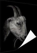 Geitenportret zwart-wit print Poster 120x180 cm - Foto print op Poster (wanddecoratie woonkamer / slaapkamer) / Dieren Poster XXL / Groot formaat!
